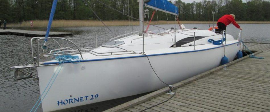 Hornet 29
